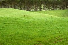 Terreno coltivabile verde smeraldo Fotografia Stock