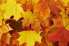 Terreno coperto di foglie di autunno immagini stock libere da diritti