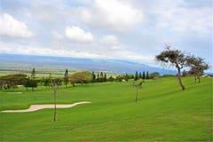 Terreno da golf con gli alberi e il sandtrap Immagine Stock