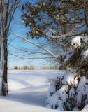 Terreno da golf del fiume della radice Fotografie Stock