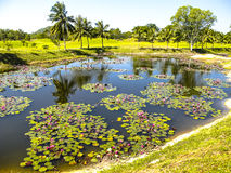 Terreno da golf e lago Fotografia Stock