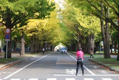 Terreno de Sapporo da universidade do Hokkaido fotografia de stock royalty free