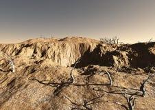Terreno del desierto con los árboles muertos Foto de archivo libre de regalías