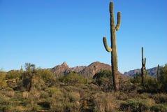 Terreno del desierto de Arizona. Fotografía de archivo