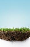 Terreno dell'erba Fotografia Stock Libera da Diritti