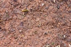 Terreno della crepa Fotografia Stock