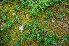 Terreno della foresta con erba Immagini Stock Libere da Diritti