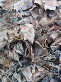 Terreno duro freddo congelato del gelo invernale delle foglie Fotografia Stock