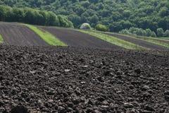 terreno fertile Fotografie Stock