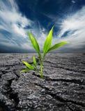 Terreno guasto crescente della depressione della pianta immagini stock libere da diritti
