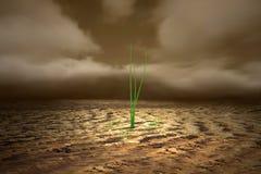 Terreno guasto crescente della depressione della pianta verde Immagini Stock Libere da Diritti