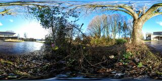 Terreno incolto con l'albero vicino al lago Immagini Stock