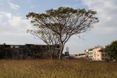 Terreno incolto urbano immagini stock