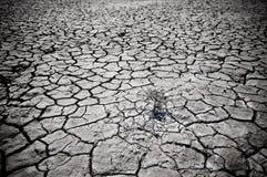 Terreno incrinato del deserto Fotografie Stock