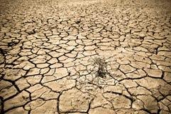 Terreno incrinato del deserto Fotografia Stock