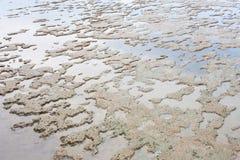 Terreno paludoso di vista sul mare della riva del fango Fotografia Stock