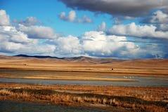 Terreno paludoso e cigno selvaggio Fotografia Stock