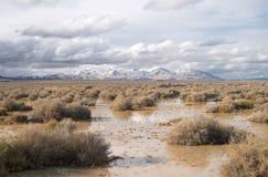 Terreno paludoso nel Nevada Fotografie Stock Libere da Diritti