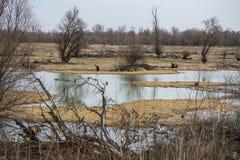 Terreno pantanoso pelo rio Imagens de Stock