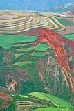 Terreno rosso Fotografie Stock Libere da Diritti