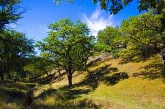 Terreno ruvido di Oak Grove Immagini Stock