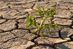 Terreno senza vita incrinato Fotografia Stock Libera da Diritti