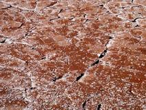 terres 1 румян Стоковое фото RF