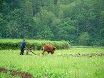 Terres arables de travail Photographie stock