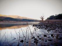 Terres australiennes de marais Photo libre de droits