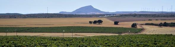 Terres cultivables à Albacete images libres de droits