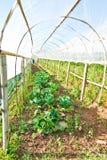 Terres cultivables Photo libre de droits