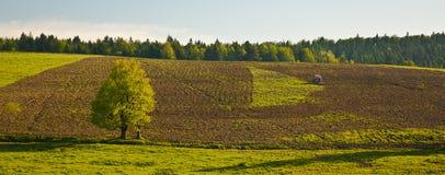 Terres cultivables Photographie stock libre de droits