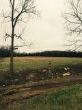 Terres cultivables Photos libres de droits