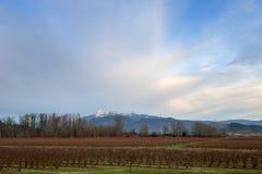 Terres cultivables avec des montagnes Photos stock