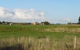 Terres cultivables avec des vaches aux Pays-Bas Photographie stock