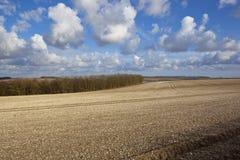 Terres cultivables crayeuses Images libres de droits