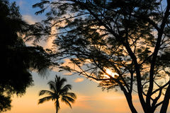 Terres cultivables d'Hawaï Photographie stock