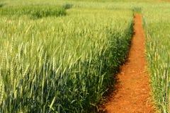 Terres cultivables d'orge Photo libre de droits