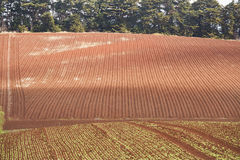 Terres cultivables de cap de Tableau Photo stock