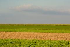 Terres cultivables de Flemis dans les couches de différentes couleurs Photo libre de droits