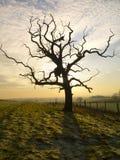 Terres cultivables de l'hiver - Yorkshire - Angleterre Photographie stock