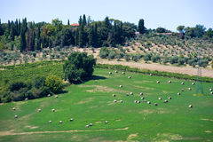 Terres cultivables de la Toscane en Italie Photographie stock