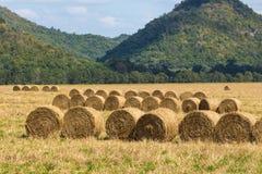 Terres cultivables de paille de petit pain Image stock