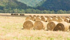 Terres cultivables de paille de petit pain Images stock
