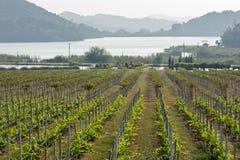 Terres cultivables de raisin Images libres de droits