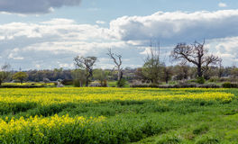 Terres cultivables de ressort dans la campagne d'Essex Photo libre de droits