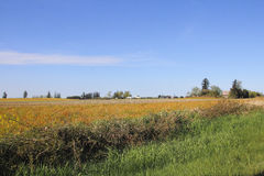 Terres cultivables du nord-ouest en Washington State Photographie stock