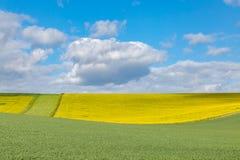 Terres cultivables du Sussex dans le printemps images libres de droits