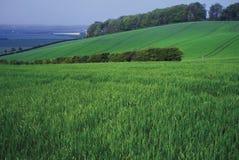 Terres cultivables les côtes de Barton Photo libre de droits
