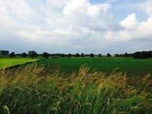 Terres cultivables luxuriantes Image libre de droits